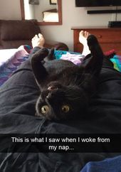 Cat Memes Of The Day 30 Pics – – Lovely Animals World – Cat Supplies Funny Cat Memes, Dog Memes, Funny Cats, Funny Animals, Hilarious, Black Cat Memes, Pet Style, Owning A Cat, Memes Of The Day
