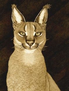 """Portrait of a Caracal"" giving that stare like he just doesn't care. Meow!"