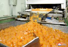 호평받는 식료품들을 생산 -운하대성식료공장에서-
