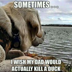 Waterfowl Obsessions                                                                                                                                                     More