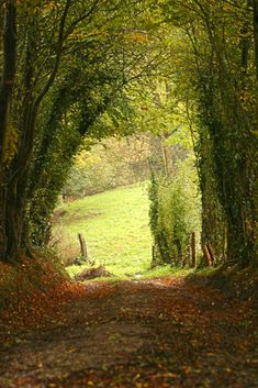 When i get older i feel ive always wanted to live in the country or country side, i could shed tears looking at how beautiful nature and . Beautiful World, Beautiful Places, Country Life, Country Roads, Country Walk, Foto Nature, Back Road, Peaceful Places, Farm Life