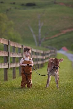 Cows and Babies
