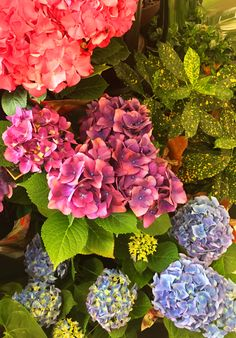 We do love a good Hydrangea! Pink, purple or blue, fresh flowers are the best!