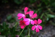 Flower 40 by Mohammad Azam