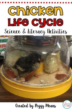Chicken Life Cycle with Science and Literacy Activities. This is a great spring unit packed with fun information and activities on the theme of the Chicken Life Cycle. This unit really delights my kiddos! Teaching Grammar, Teaching Social Studies, Teaching Science, Science Lessons, Life Science, Teaching Strategies, Teaching Resources, Teaching Ideas, Agricultural Science