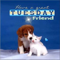Have a great Tuesday quotes quote days of the week tuesday tuesday quotes happy tuesday tuesday quote Happy Tuesday Quotes, Tuesday Humor, Its Friday Quotes, Happy Quotes, Blessed Wednesday, Saturday Quotes, Monday Memes, Happy Thursday, Good Morning Tuesday