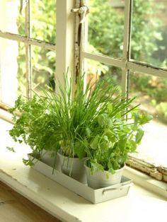 herbs on the windowsill