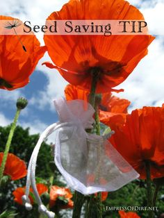 Smart seed saving tip you can use all season long empressofdirt.net/seed-saving-tip-mark-your-favourite-blossoms/