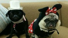 National Dress Up Your Pet Day 2014