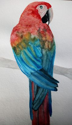 Perroquet à la peinture aquarelle