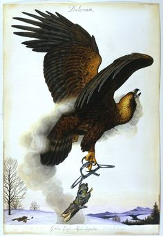 Inside Walton Ford's Brutal World of Man and Beast - The New York Times Walton Ford, John James Audubon, Project, Wildlife Art, Creature Design, Bird Art, American Artists, Animal Drawings, Illustrators
