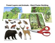 Learn about animals and habitats through simple, fun activities on Exploringnature.org Poster Colour, Biomes, Fun Activities, Mammals, Habitats, Moose Art, Simple, Illustration, Crafts