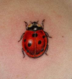 ladybug tattoo - I need this little guy to cover my current ladybug that was…