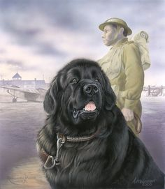 Shop :: Newfound Friends :: Newfoundland Dogs Working for Childrens Charities=Sold in Aid of Children's Hospice S. Animals And Pets, Cute Animals, War Dogs, Dog Fighting, Dog Illustration, Gentle Giant, Mountain Dogs, Dog Art, Dog Pictures