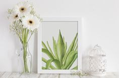 Watercolor painting of an Agave plant.