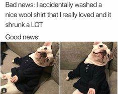 Dog Meme Funny Dog Memes, Funny Animal Memes, Cute Funny Animals, Funny Cute, Funny Dogs, Cartoon Memes, Super Funny, Bts Memes, I Love Dogs
