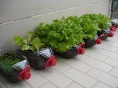 recyclage au jardin…