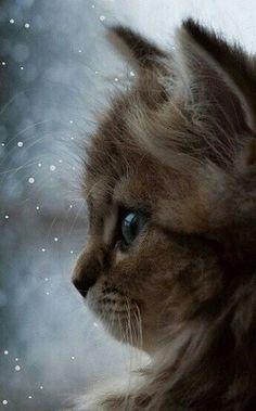 Magnifique regard. !!!