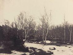 eugène cuvelier, les bouleaux sur le sable, vers 1860