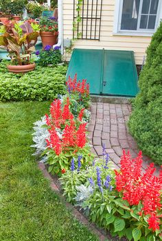 Red And Blue Salvia With Dusty Miller Plant Choices Pinterest Dusty Miller Salvia And