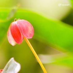 Aveces el final es hermoso... #flowers #flower  #petal #petals #nature #beautiful #love #pretty #plants #blossom #sopretty #spring #summer #flowerstagram #flowersofinstagram #flowerstyles_gf #flowerslovers #flowerporn #botanical #floral #florals #insta_pick_blossom #flowermagic #instablooms #bloom #blooms #botanical #floweroftheday
