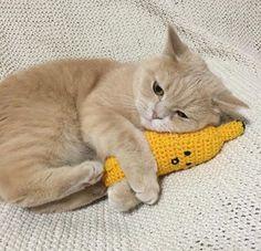 I love you, corn buddy