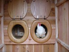 ...Chicken Coop Inside LOL (640×480)