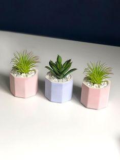 Set of Three Mini Desk Plants Artificial Succulent & Air Types Of Air Plants, Air Plants Care, Fake Plants, Air Plant Terrarium, Garden Terrarium, Plant Pots, Plant Wall, Plant Decor, Desk Plant