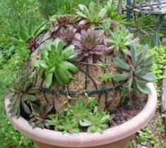 Succulent Sphere     Make your own Succulent Globe with this Tutorial