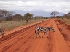 Silvia's Trips: Mal d'Africa