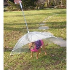 Pet Umbrella (Dog Umbrella) Keeps your Pet Dry and Comfortable in Rain. I need this...$19.99  Amazon
