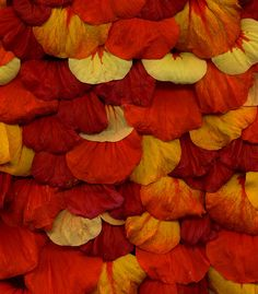 ~~Nasturtium by horticultural art~~ Orange Yellow, Burnt Orange, Orange Color, Amazing Flowers, Macro Photography, Textures Patterns, Color Inspiration, Color Mixing, Floral