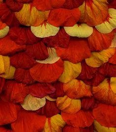 Orange   Arancio   Oranje   オレンジ   Colour   Texture   Style   Form   Pattern  