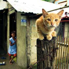 Professional pet photography: 40 wonderful and cute pictures of photogenic cats - Blog of Francesco Mugnai