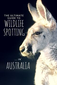 The ultimate guide to the best wildlife spots in Australia...