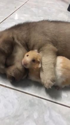 Cute Little Animals, Cute Funny Animals, Funny Cute, Baby Animal Videos, Funny Animal Videos, Mundo Animal, My Animal, Cute Puppies, Cute Dogs