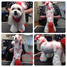 -repinned- Snowflakes. Creative dog grooming