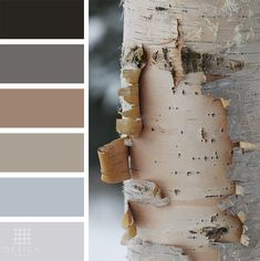 Birch Tree Color Palette Color Palettes from Design Pool - Color and Design Specialists - Black, Gra Grey Bedroom Colors, Bedroom Colour Palette, Black Color Palette, Brown Color Schemes, House Color Schemes, Bedroom Color Schemes, Colour Pallete, Color Palettes, Printable Christmas Coloring Pages