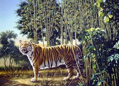 Funny pictures about Find The Hidden Tiger. Oh, and cool pics about Find The Hidden Tiger. Also, Find The Hidden Tiger photos. Funny Animal Memes, Funny Animal Pictures, Funny Images, Funny Photos, Funny Animals, Funny Humor, Memes Humor, Hilarious Jokes, Bing Images