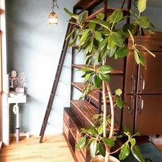Plants, Instagram, Norte, Plant, Planets