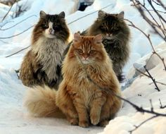 3 cats in the snow