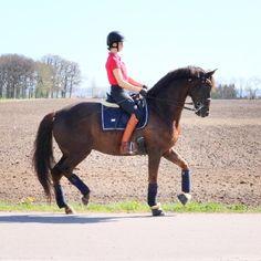 👊🏼Preparing for competitionday with this lovely little man #Americo #fingerscrossed #esstockholm#schockemöhle#charlesowen#roeckl#tävlingsdags#stgeorge#dressagehorse#competition#dressage#dressurpferd#paarden#häst#tävling#dressyrryttare#hippson#dressyrhäst#häst#dressurturnier Little Man, Dressage, Bff, Horses, Nature, Animals, Horse, Dressage Horses, Naturaleza