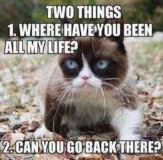Top 26 Funny memes animals Life - Cobra Kai Quotes Grumpy Cat Quotes, Funny Grumpy Cat Memes, Cat Jokes, Funny Cats, Funny Memes, Hilarious, Funny Minion, Funny Animal Jokes, Funny Animals