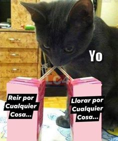 Discover recipes, home ideas, style inspiration and other ideas to try. Funny Spanish Memes, Funny Memes, Jokes, Memes Do Dia, Meme Faces, Mood Pics, Reaction Pictures, Best Memes, Wattpad