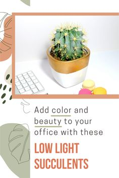 Looking for a low light plant for your office? Decorate your office space with one of our top 10 office succulents, perfect for low light areas. We've also included succulent care tips to keep your succulents alive.