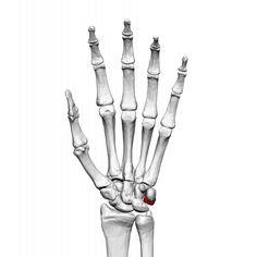 Image result for skeleton hand front