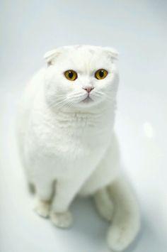 magical-meow:    SvetlanaMih
