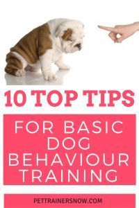 Teach your dog the absolute basics in dog behaviour like how to come when you call and other basic dog training tips.We feature ten basic dog training obiedience tips to help and inspire any newbie dog owner! @KaufmannsPuppy