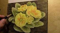 drawing a primrose with Inktense pencils