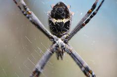 Aranha (4)